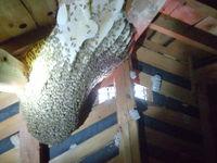ミツバチの巣駆除 和歌山市 2014-4