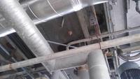 工場 プラント施設に営巣したスズメバチ | 和歌山市