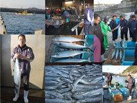 旬海の美味しさの秘密は、獲れたての魚を社長が有田の辰が浜の漁港で、毎朝直接買い付けているからなのです