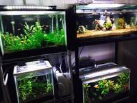 我が家の熱帯魚水槽