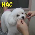 HAC和歌山