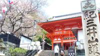 【紀三井寺桜情報3月21日】少しずつ開花してます。
