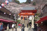 【現在3分咲ぐらい】お花見は紀三井寺で