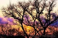 夕日を見る会での写真コンテスト3位