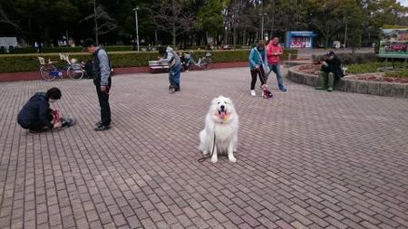 大阪長居公園でしつけ教室
