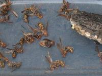 大怖!蜂の大群
