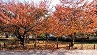 気温やや下がり紅葉進む
