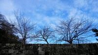 今日の冬の雲
