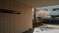 桐蔭高校桜満開
