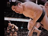 19年ぶり日本人横綱