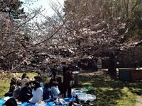 和歌山城は花見でいっぱい