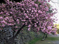 桜散り新緑の季節