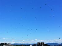 ミツバチの群れ大量移動
