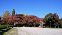 大新公園も紅葉が進む