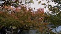 紅葉渓紅葉も紅葉