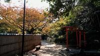 和歌山市岡公園内野生のリス