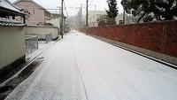 和歌山市朝から雪積もる