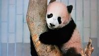 上野と和歌山のパンダ事情
