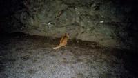 ネズミを襲うネコ