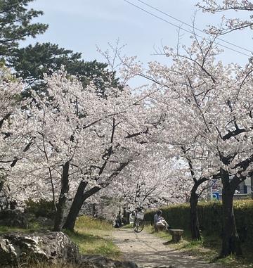春ですねぇ!