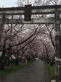 4月15日(水)LIVE@OLDTIME