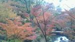 和歌山城・紅葉