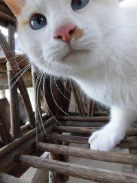 さぼってばかりで。。。猫と遊んでま~す