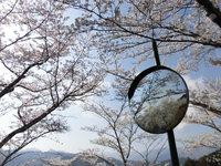 桜をすこし