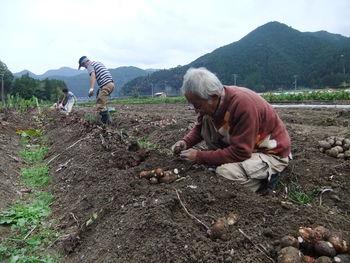 芋掘り援農ありがとう~!!