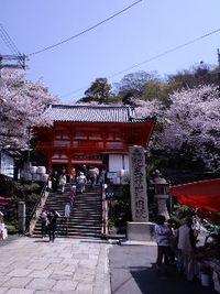 紀三井寺の桜は