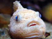 魚の目・タコ