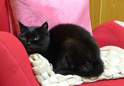 16歳...愛猫
