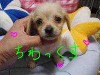 可愛い仔犬生まれていま~す!