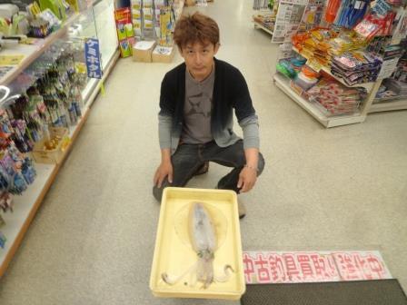 【和歌山釣果情報】雑賀崎のアオリイカ