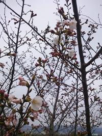 桜が…☆☆☆