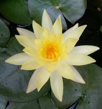 アーユルベーダと占星術からみた自分。新月瞑想会♪