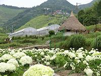5月14日(土)ツーギー谷のお花畑イベント開催