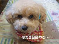 台湾春の旅~11「龍山寺」