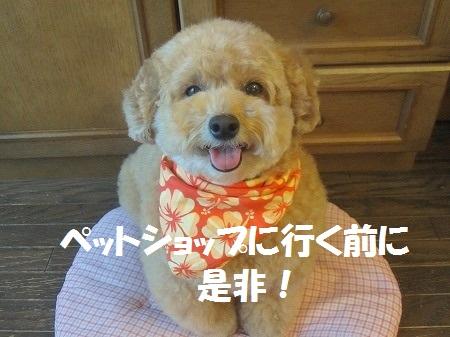 和歌山市保健所犬の譲渡会開催のお知らせ