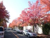 秋色見つけました