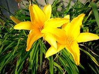 6月の花・その2
