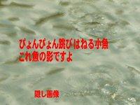 土入川2月13日