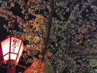 夜桜と入学式
