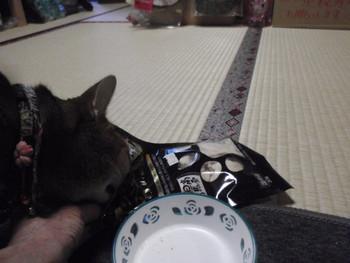 猫 おやつ フリーズドライ