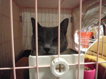 猫カフェ みーこ かんちゃん療養中