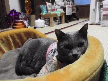猫カフェ みーこ かんちゃん