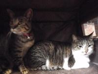 猫カフェ みーこ かりんちゃん&マロン君