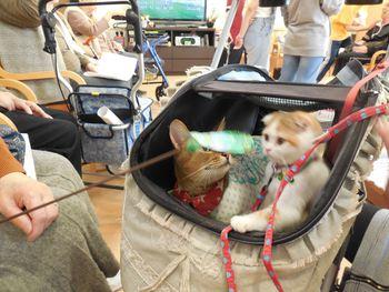 猫 うさぎ ハリネズミ 施設ふれいあ訪問 みーこ