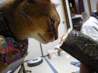 猫 節分BDおめでとう 7歳 大ちゃん小ちゃん アビシニアン