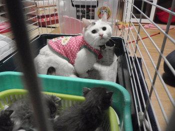 赤ちゃん猫  猫カフェみーこ